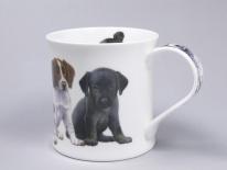 Puppies Springer Spaniel