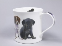 WESSEX Puppies Springer Spaniel- porcelana